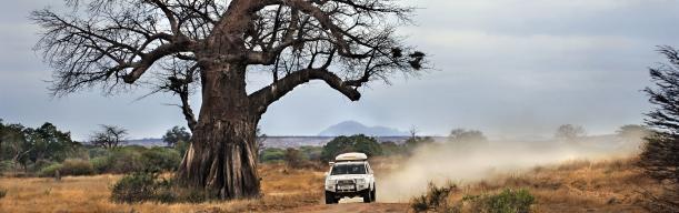 Botswana auf eigene Faust
