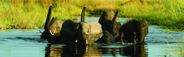 Die Vielfalt Botswanas