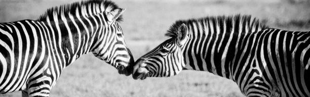 Kleingruppensafari Botswana & Simbabwe